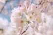 春だ! AI&仮想通貨の俳句を詠もう!会 by Team AI 4/1(日)