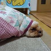 ryo_harihara