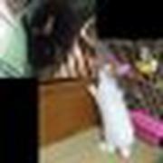 Haduki_Game09