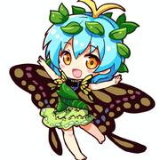 Papillon6814