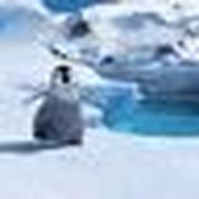 penguin_18
