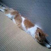 Wada_Miho