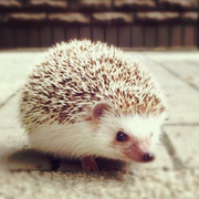hedgehog051