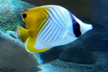 Aquarium、Fishes and Deep-Learning
