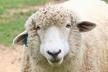 DDD本 読書会(羊) #17
