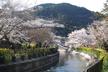 お花見!オープンデータソン in 京都