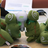 openSUSE  Leap 42.2 Release Party Tokyo