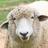 DDD本 読書会(羊) #9
