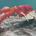 raypot