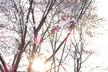FuraIT #25 - 久しぶりの発表大会